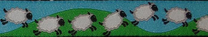 sheep17